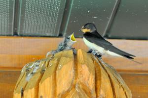 Trading Post Birds 2