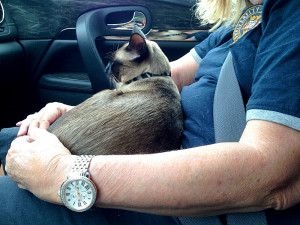 Travels with Smoke on Charlie's lap