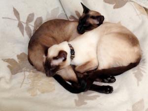 Mist & Smoke Blanket (Siamese cats)