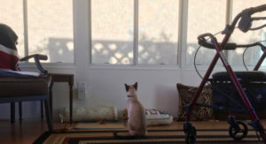 Sunroom Cats -- Shadows on the screen